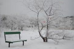 Parque bonito do inverno com a borboleta vermelha na árvore Foto de Stock Royalty Free