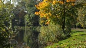 Parque bonito do outono vídeos de arquivo