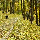 Parque bonito do outono Imagens de Stock Royalty Free