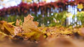 Parque bonito do outono com as aleias com close-up caído amarelo das folhas filme