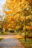 Parque bonito do outono com lanterna da rua Amarelas brilhante e laranja, cores vermelhas do outono nas folhas em árvores foto de stock