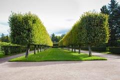 Parque bonito do verão Imagem de Stock