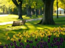 Parque bonito na mola Foto de Stock