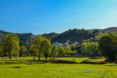 Parque bonito para andar Gramado verde, árvores e céu azul montenegro imagem de stock