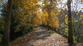 Parque botânico no outono, Istambul do arboreto de Ataturk foto de stock royalty free