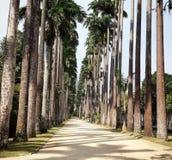Parque Botanico, Rio de Janeiro, Brésil Images stock