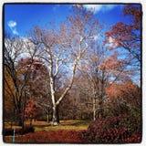 Parque brilhante de Cincinanti do céu azul da folhagem de outono fotografia de stock royalty free