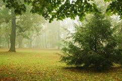 Parque brumoso del otoño Imagenes de archivo