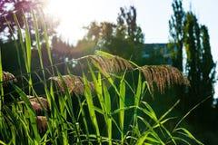 Parque caliente plumoso del aire libre de la llamarada solar de la puesta del sol de la planta fotografía de archivo
