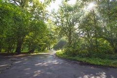 Parque cedo na manhã Imagem de Stock