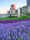 Parque Chicago do milênio do jardim de Murie Fotos de Stock Royalty Free