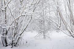 Parque coberto de neve e bancos do inverno Parque e cais para alimentar Foto de Stock Royalty Free