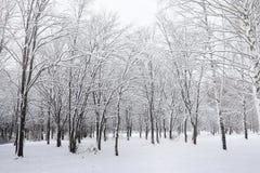 Parque coberto de neve e bancos do inverno Parque e cais para alimentar Imagens de Stock Royalty Free