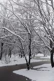 Parque coberto de neve e bancos do inverno Parque e cais para alimentar Imagem de Stock Royalty Free