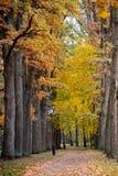 Parque colorido de Autumn October Callejón de los árboles del follaje Fotos de archivo libres de regalías