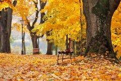 Parque colorido de Autumn October Callejón de los árboles del follaje Imagen de archivo libre de regalías