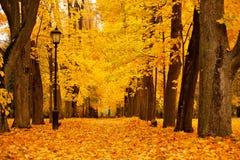 Parque colorido de Autumn October Callejón de los árboles del follaje Imagenes de archivo
