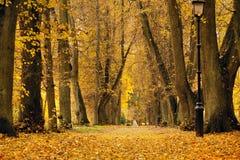Parque colorido de Autumn October Callejón de los árboles del follaje Imagen de archivo