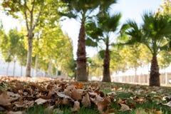 Parque com as folhas caídas na terra fotografia de stock