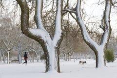 Parque com corredor da neve, da mulher e do cão Imagem de Stock