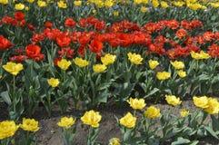 Parque com flores da mola Fotografia de Stock