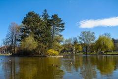 Parque com lago Imagens de Stock