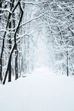 Parque com neve Fotos de Stock