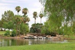 Parque com palmeiras e lago Imagens de Stock Royalty Free