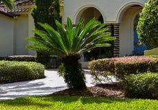 Parque com plantas tropicais Imagens de Stock