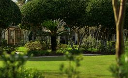 Parque com plantas tropicais Fotografia de Stock Royalty Free
