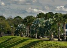Parque com plantas tropicais Nuvens em um dia ensolarado Fotos de Stock