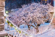 Parque comum congelado de Boston no inverno foto de stock royalty free