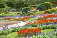 Parque con las flores Foto de archivo