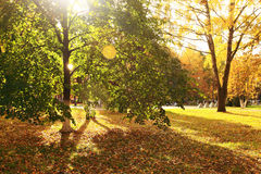 Parque con las hojas amarillas, verano indio del otoño Imágenes de archivo libres de regalías