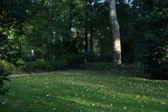Parque con las hojas secas en el piso Fotografía de archivo libre de regalías