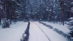 Parque con las trayectorias iluminadas por las linternas y la gente que camina en invierno clip Opini?n superior la gente que cam almacen de metraje de vídeo