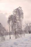Parque con los árboles de abedul en hielo Fotografía de archivo
