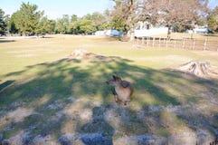 Parque con los ciervos Imágenes de archivo libres de regalías