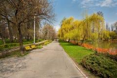 Parque con los sauces y agua Imagenes de archivo