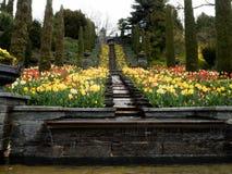 Parque con los tulipanes y la cascada Foto de archivo