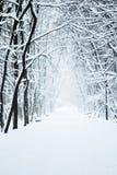Parque con nieve fotos de archivo