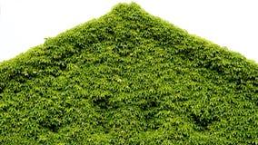 Parque criativo com elevação dianteira do triângulo verde do telhado imagens de stock royalty free