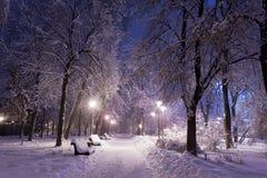 Parque cubierto con nieve en la noche. Fotografía de archivo libre de regalías