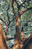 Parque da árvore Imagem de Stock Royalty Free