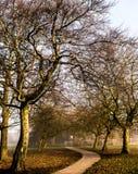 Árvores que despertam Fotos de Stock Royalty Free