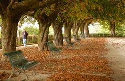 Parque DA Alameda - Santiago de Compostela images stock