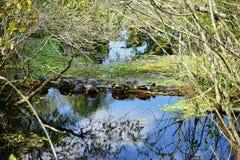 Parque da alface Foto de Stock Royalty Free