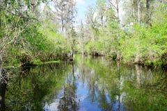 Parque da alface em Tampa Imagem de Stock
