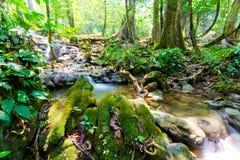 Parque da cachoeira da floresta de Sra Nang Manora Phangnga Nation fotos de stock