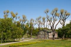 Parque da cidade com árvores estranhas Foto de Stock Royalty Free